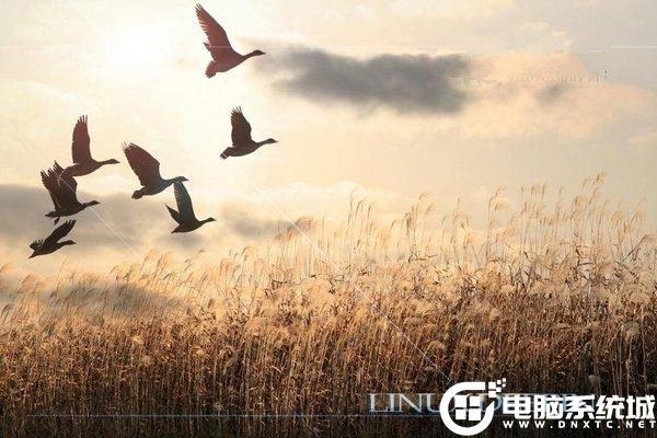 在Linux系統下查找可執行文件解決方法